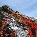 Séduction ''La Magie des Bols Tibétains''